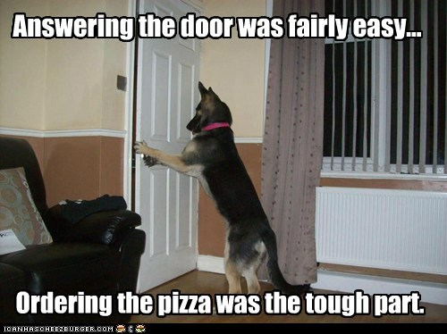 dogs,door,german shepherd,ordering pizza,smart dog,tick