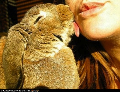 bunnies bunny happy bunday kisses kissing lick squee tongue tongues - 6336681472