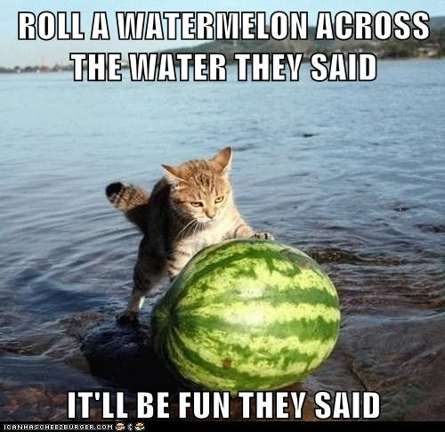ROLL A WATERMELON ACROSS THE WATER THEY SAID  IT'LL BE FUN THEY SAID