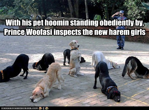 With his pet hoomin standing obediently by, Prince Woofasi inspects the new harem girls
