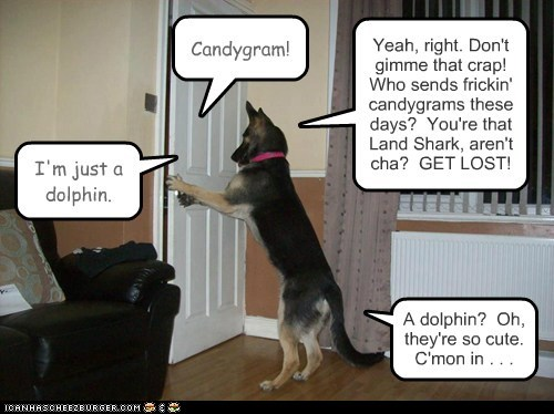 Candygram! Yeah, right. Don't gimme that crap! Who sends frickin' candygrams these days? You're that Land Shark, aren't cha? GET LOST! I'm just a dolphin. A dolphin? Oh, they're so cute. C'mon in . . .