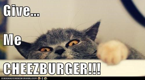 Cheezburger Image 6338349824