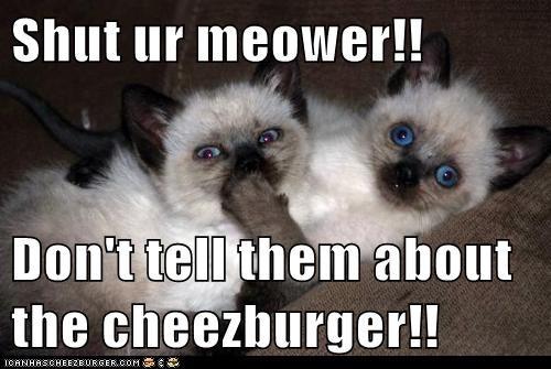 Cheezburger Image 6338398976