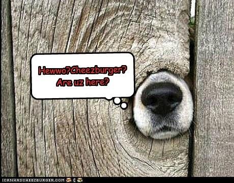 Hewwo?Cheezburger?Are uz here?