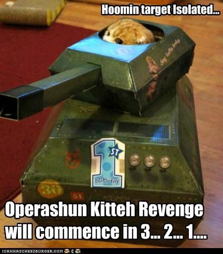 Hoomin target Isolated... Operashun Kitteh Revenge will commence in 3... 2... 1....