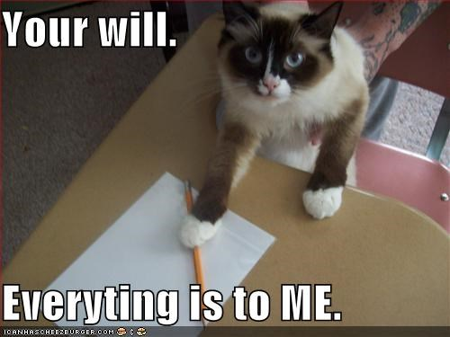 lolcats,will