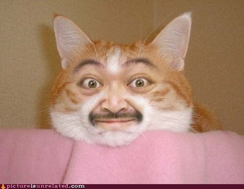 Cats face mustache shopped pixels wtf - 6339359488