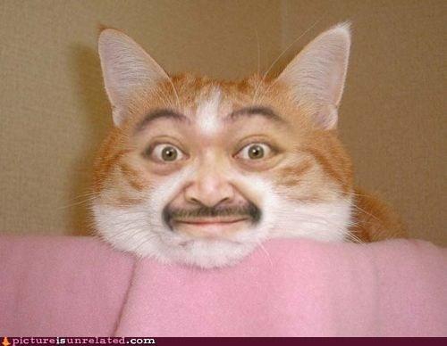 Cats face mustache shopped pixels wtf - 6339359488