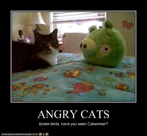 ANGRY CATS Screw birds, have you seen Catwoman?