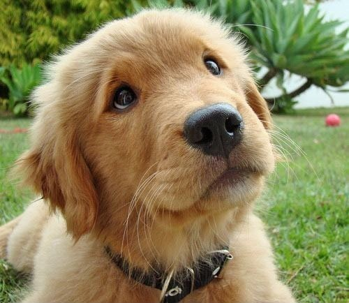 Sundog