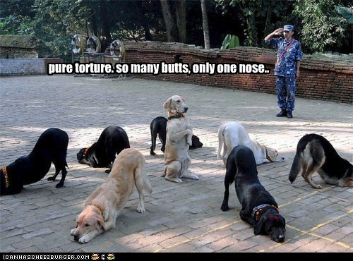 dogs political pictures soldiers - 6340192512