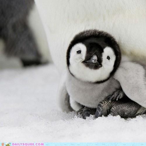baby bird chick daddy penguin snow - 6340823040