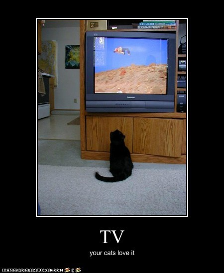 TV your cats love it