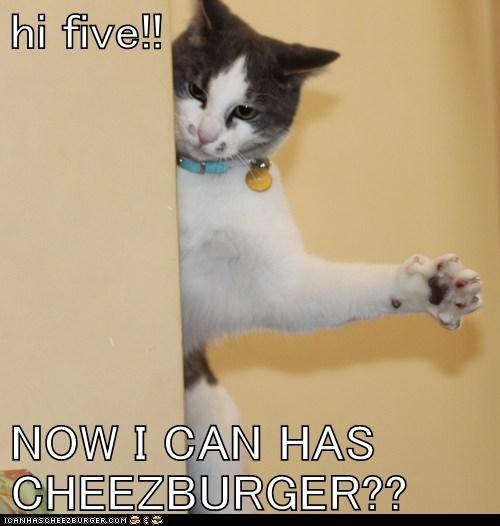 Cheezburger Image 6341242368
