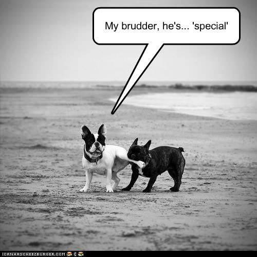 annoying,beach,bite,captions,dogs,french bulldogs,legs,siblings,special,special relativity