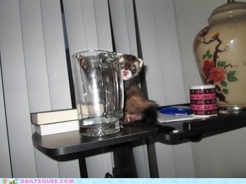 ferret pet reader squee water - 6341929984