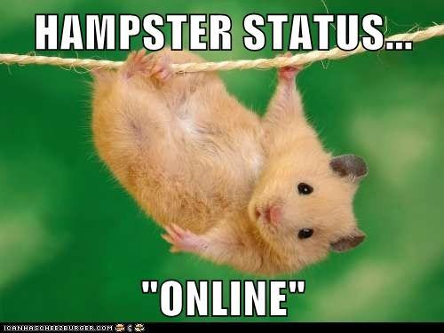 afk clothesline hamster hanging online pun status - 6342007296