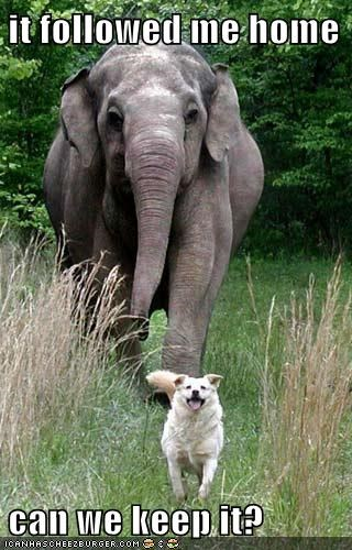 can I keep it,dogs,elephant,followed me home,following,friends,happy