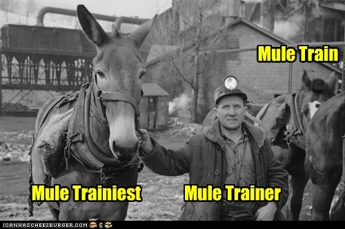 Mule Train Mule Trainer Mule Trainiest