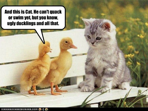 cant-swim cat ducklings kids kitten ugly duckling - 6343344896