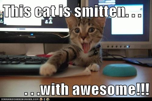 This Cat Is Smitten With Awesome Lolcats Lol Cat