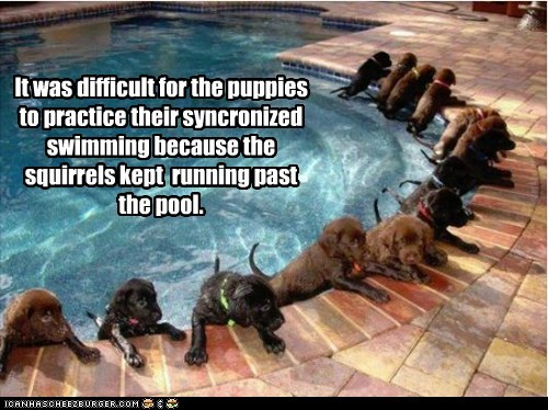 dogs labrador puppies swimming pool synchronized swimming