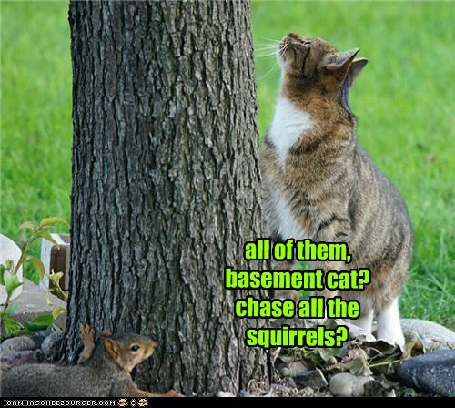 all of them, basement cat? chase all the squirrels?