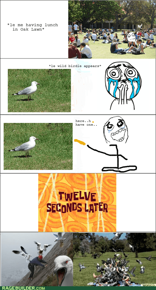 best of week,cuteness overload,feeding,Rage Comics,seagull