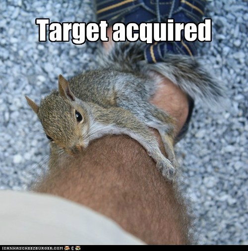 bad situation confused nuts squirrel target acquired - 6344121856