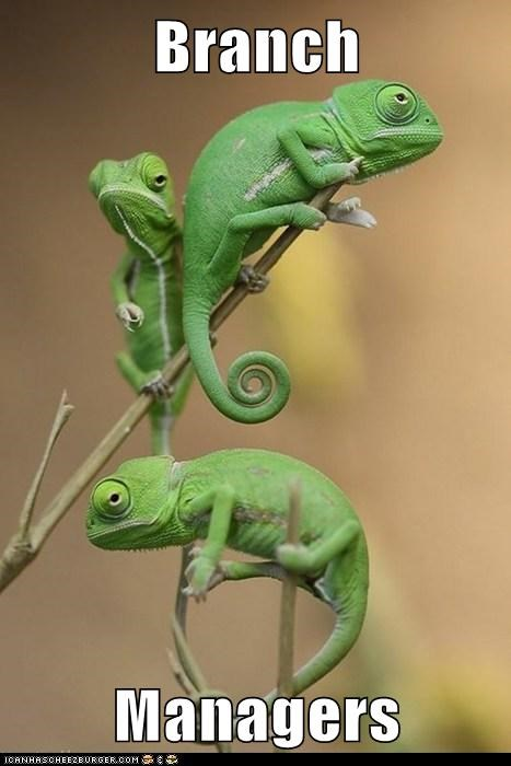 branch branch manager chameleons climbing lizards tree