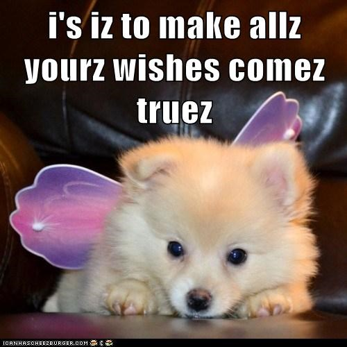 costume dogs fairy godmother fairy wings pomeranian puppy wishes