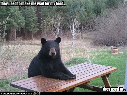bear,eating,food,insanity,ominous,threatening,used too,wait