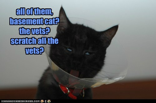 all of them, basement cat? the vets? scratch all the vets?