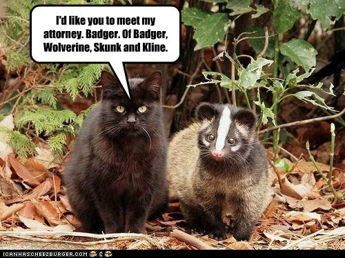 attorney badger cat court law lawyer scary sue - 6345072640