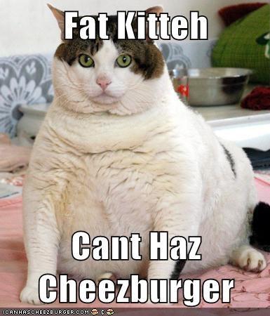 Cheezburger Image 6345282816