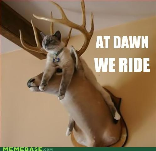 antlers at dawn we ride cat deer Memes - 6345320960