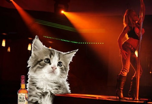 customer service kitten strip club - 6345575424