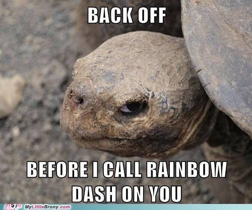 meme rainbow dash tank turtle - 6346188544