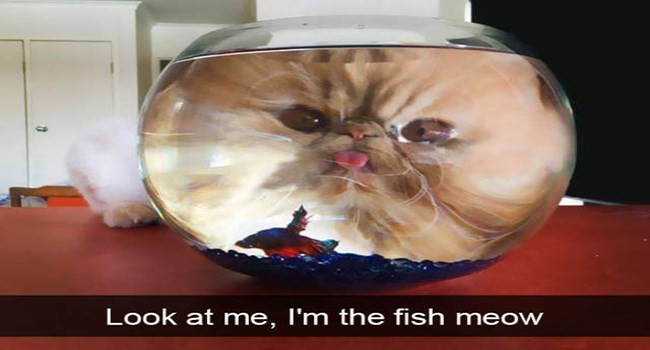 funny snapchat pic of cat looking from behind a fish bowl