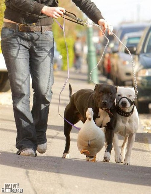 animals dogs pets walking - 6346301952