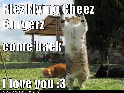 Cheezburger Image 6346561024