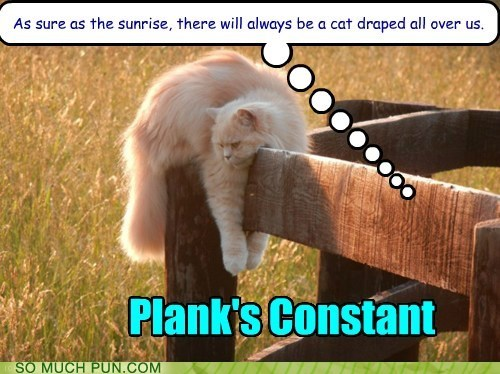 cat constant homophone lolcat math mathematics plancks-constant plank surname - 6346653696