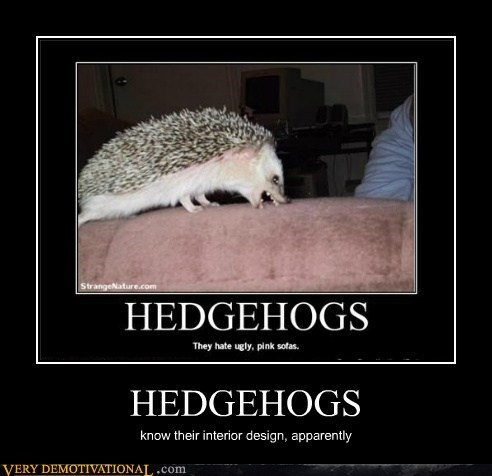 hedgehogs hilarious interior design wtf - 6346805760