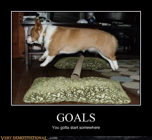 corgi goals high jump hilarious - 6346893056