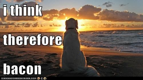 bacon,beach,beaches,best of the week,captions,dogs,golden retriever,Hall of Fame,ocean,philosophical dog,philosophy