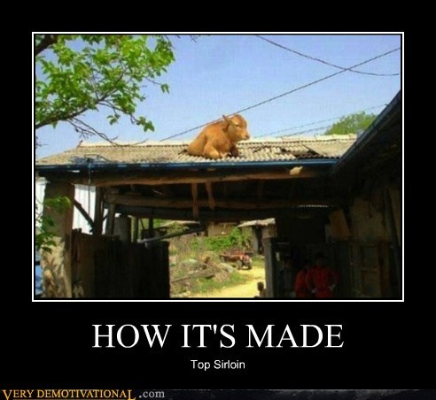 cow,hilarious,how its made,roof,sirloin