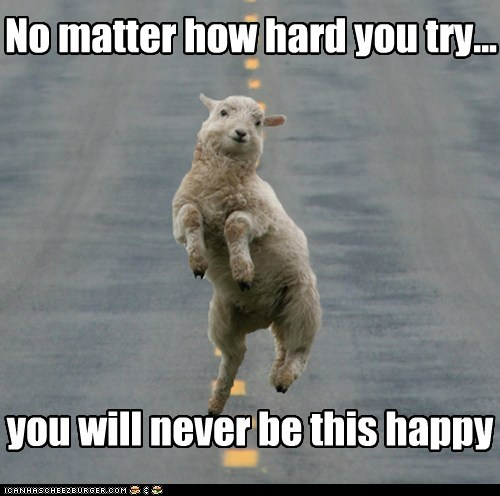 bliss,captions,happiness,happy,never,prancing,Sad,sheep,street,try hard