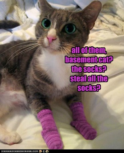 all of them, basement cat? the socks? steal all the socks?