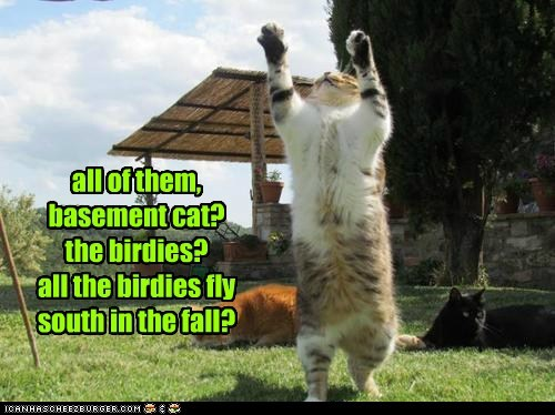 all of them, basement cat? the birdies? all the birdies fly south in the fall?