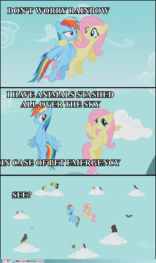animals,comics,emergency,fluttershy,pet,rainbow dash
